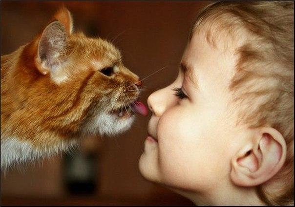 Отношение к животным. Сравнение