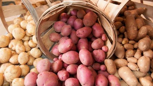 Что может обычный картофель?